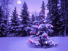 19 декабря зажжётся Главная Ёлка города | CityTraffic