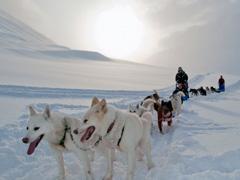 26 января стартовала первая зимняя историко-этнографическая экспедиция на собачьих упряжках «Волга Квест»
