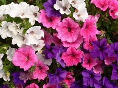 В городских парках разобьют цветники