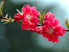 1 мая вгороде пройдут праздничные мероприятия, посвященные Дню весны итруда