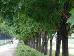 Утром 1мая будет ограничено движение по улице Юбилейной от Свердлова до центральной аллеи Парка Победы