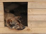 Тольяттинец втянул внаркобизнес даже собаку
