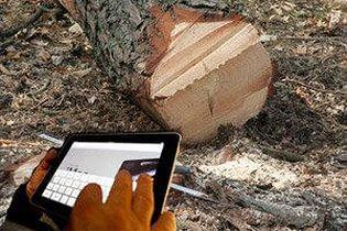 Лесная охрана хочет знать, кто взял из лесу елочку домой