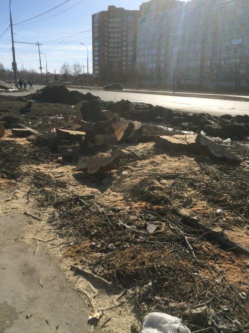 Полиция просит тольяттинцев сообщить, что им известно овырубке тополей