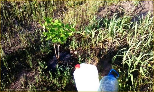 Тольяттинцы не оставили лес Памяти безводы