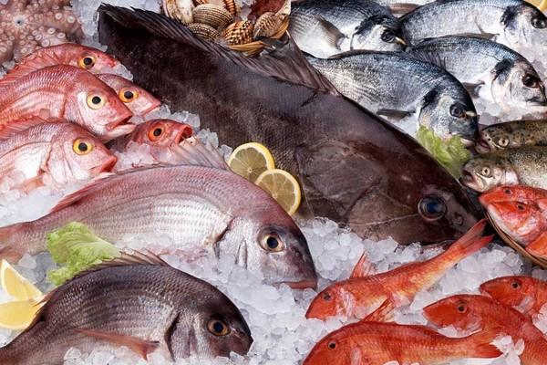 В Тольятти ищут организатора рыбного фестиваля | CityTraffic