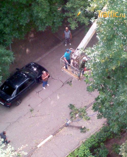 Тольятти очистят от сухих деревьев