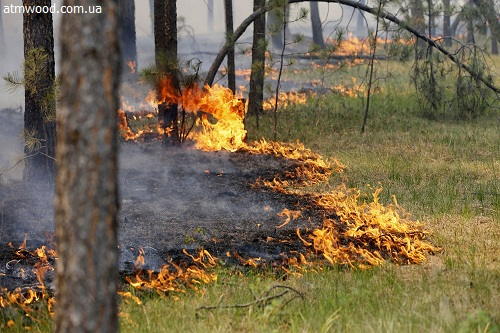 Весной 2017 года изменятся Правила пожарной безопасности влесах
