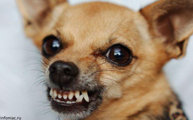 Тольяттинку укусила за глаз собственная собака | CityTraffic