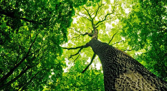 В Новокуйбышевске посадят деревья на полмиллиона рублей | CityTraffic
