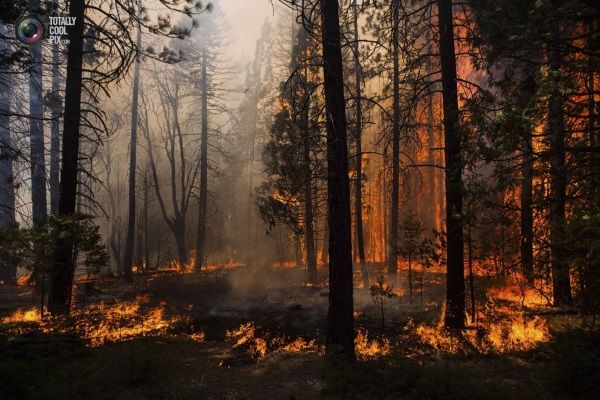 В Самарской области объявлено штормовое предупреждение из-за опасности пожаров | CityTraffic