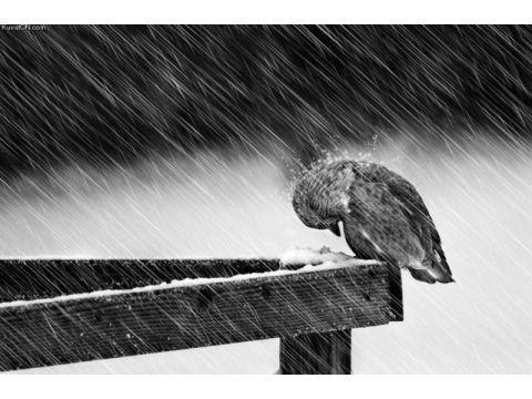 Внимание: экстренное предупреждение МЧС ошквалистом ветре, дожде играде вСамарской области