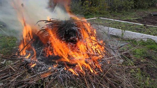Жителям Тольятти напомнили, что сжигание травы запрещено инаказывается штрафами