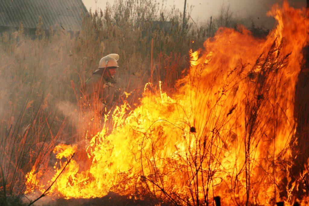 В Самарской области продлен режим чрезвычайной пожароопасности лесов | CityTraffic