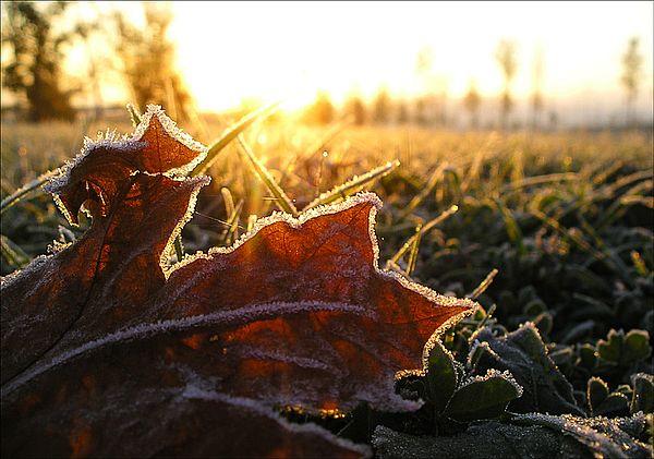 В первые дни рабочей недели вСамарской области ожидаются заморозки