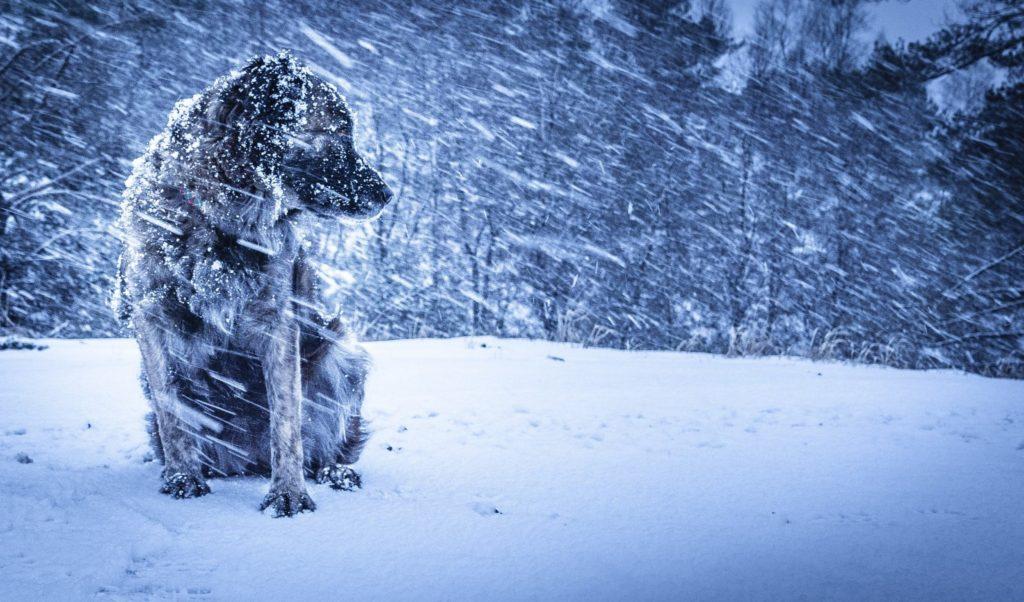 Усадьбу Деда Мороза в Самаре открыл главный волшебник страны из Великого Устюга: видео | CityTraffic