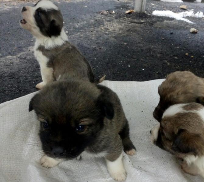 Полицейские спасли пятерых щенков, брошенных погибать на автобусной остановке вполиэтиленовом пакете
