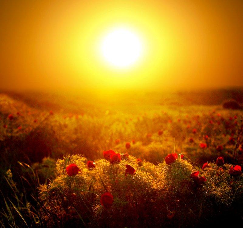 Вечером 21 июня после летнего солнцестояния наступит астрономическая осень | CityTraffic