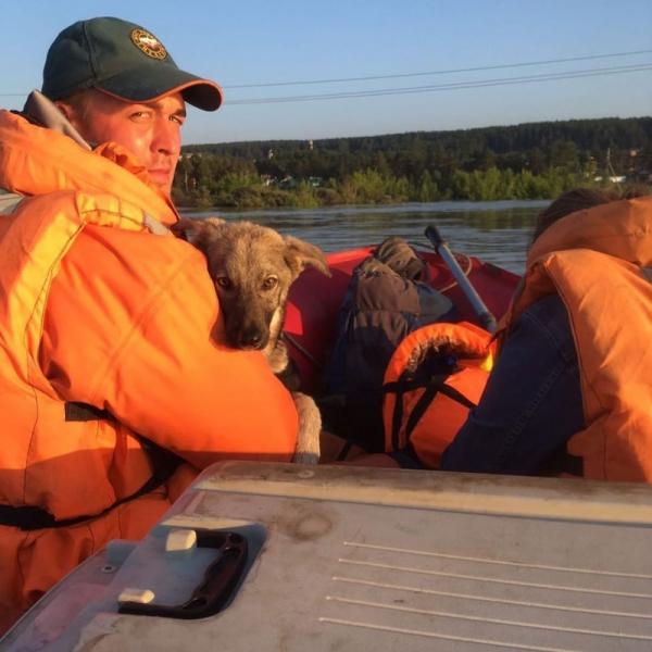 В Иркутской области из зоны паводка спасатели эвакуируют животных