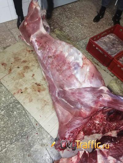 На оптовый рынок Тольятти завезли тонну мяса, полученного от больных животных | CityTraffic