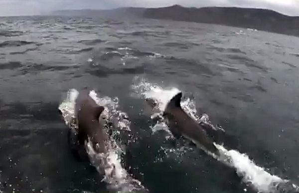 Огромные дельфины отправились в путешествие вместе с пассажирами лодки: видео | CityTraffic