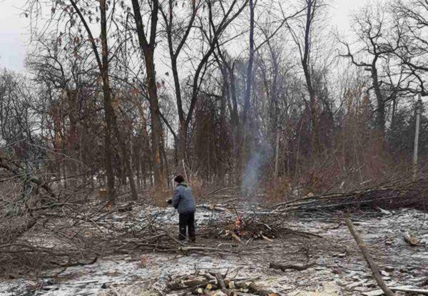 """В Самаре остановили вырубку деревьев на месте бывшей турбазы """"Мечта""""   CityTraffic"""