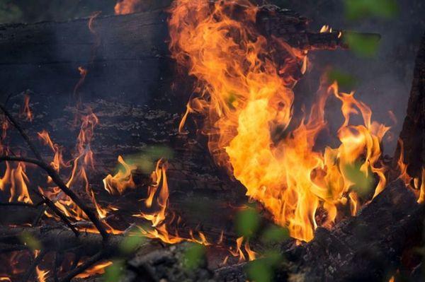 В Тольятти в поджоге леса подозревают мстительных бомжей | CityTraffic