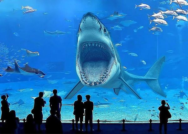 Бесплатно на акул в океанариуме Самары смогут посмотреть только дети до 3 лет | CityTraffic
