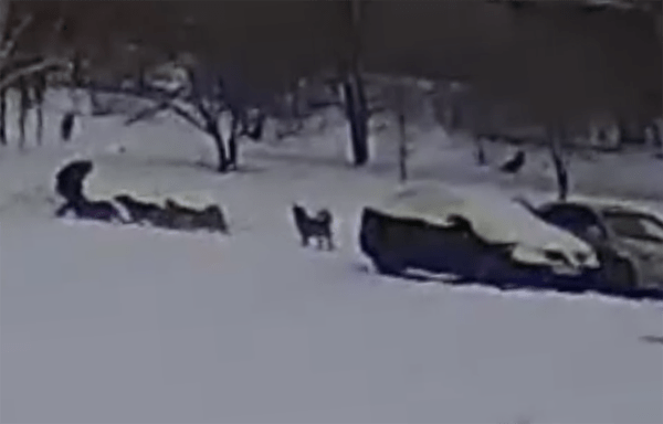 Детей вТольятти атакуют бездомные собаки: видео