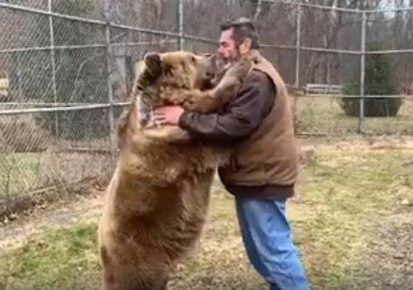 Две медведицы не отпускают хозяина, пока вдоволь не пообнимаются с ним: видео | CityTraffic