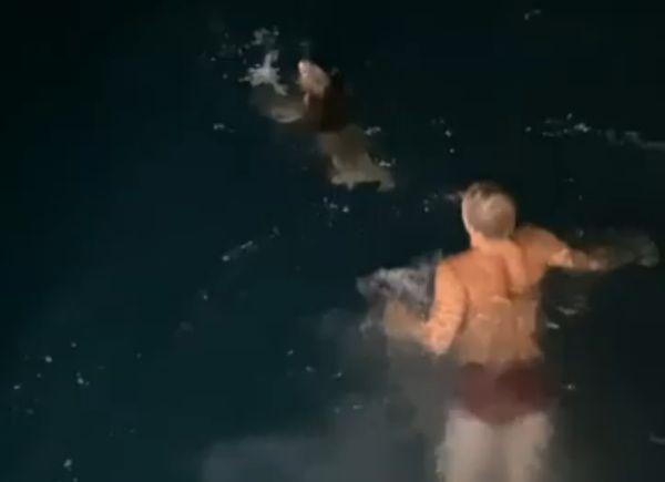Рыбак из Австралии спас коалу, который упал вводу: видео