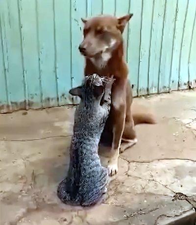 Кот делает релаксирующий массаж собаке: видео | CityTraffic