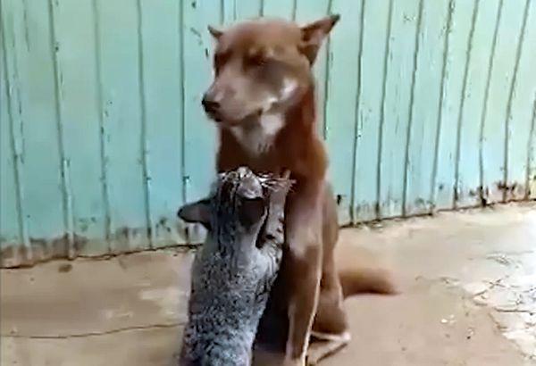 Кот делает релаксирующий массаж собаке: видео   CityTraffic