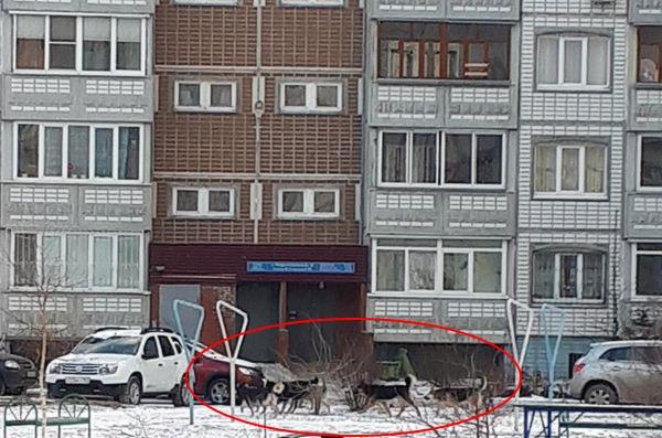 В Тольятти бездомные собаки напали на детей, идущих из школы домой   CityTraffic