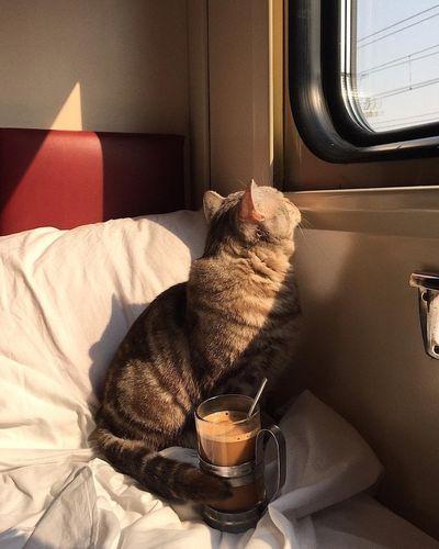 Пассажиры забывали в поездах весла, утюги и котов осенью 2019 года | CityTraffic