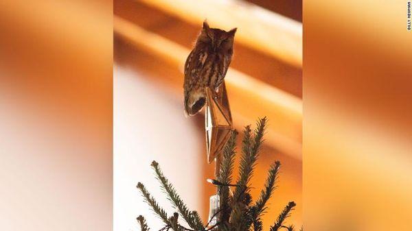 Сова больше недели прикидывалась украшением на елке: видео | CityTraffic