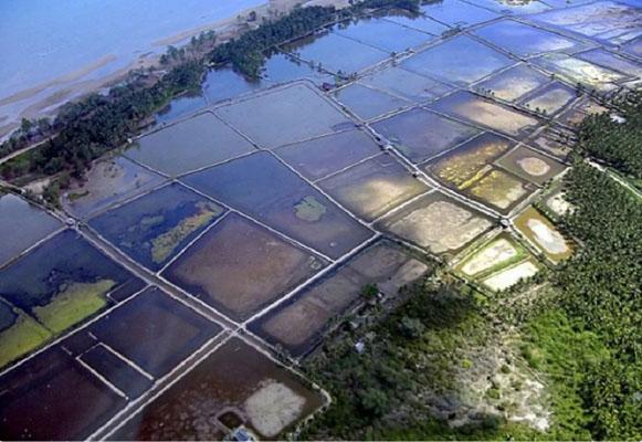 Тольяттинский «Дрон-эколог» поможет выращивать креветок в Эквадоре | CityTraffic