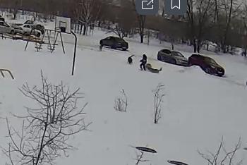 В Тольятти произошло очередное нападение бездомных собак на ребенка: видео | CityTraffic