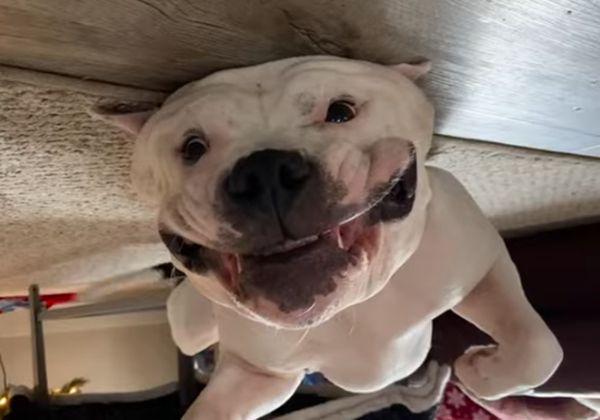 Пес не может прекратить улыбаться от счастья, лежа вверх лапами возле елки: видео | CityTraffic