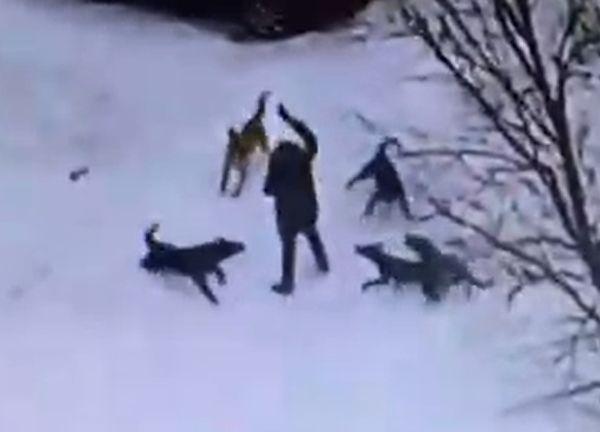 СК займется еще одним случаем нападения стаи бездомных собак на ребенка в Тольятти | CityTraffic