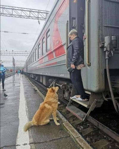 В Самаре потерявшийся на жд вокзале пес встречает поезда, ожидая своего хозяина | CityTraffic