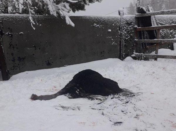 Очевидцы утверждают, что дикие собаки растерзали страусов и оленя из мини-зоопарка под Тольятти | CityTraffic