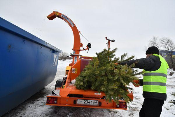 В Самарской области после новогодних праздников более 1000 ёлок отправили на переработку | CityTraffic
