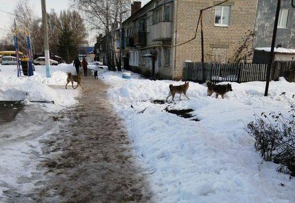 Жители Волжского района Самарской области жалуются на агрессивных бродячих собак | CityTraffic