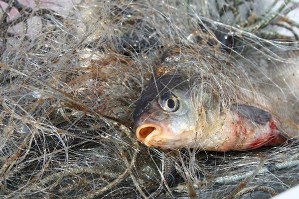 Браконьер из Новокуйбышевска наловил рыбы на 20 тысяч рублей