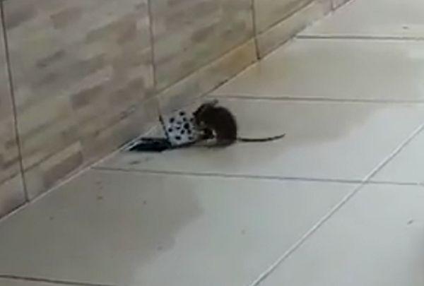 Крыса устроила побег, подняв решетку для слива воды: видео | CityTraffic
