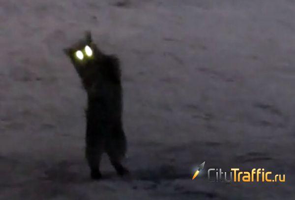 Кошка с горящими глазами выкопала из сугроба мышь и устроила с ней безумные пляски: видео | CityTraffic
