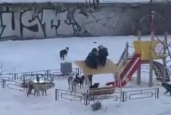 СК начал проверку случая с нападением бездомных псов на детей в Новокуйбышевске | CityTraffic