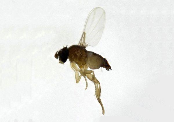 Россиянам угрожают тропические паразиты, которые едят даже вазелин с гуталином | CityTraffic