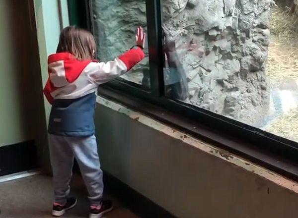Горилла и 5-летняя девочка устроили веселье в зоопарке: видео   CityTraffic